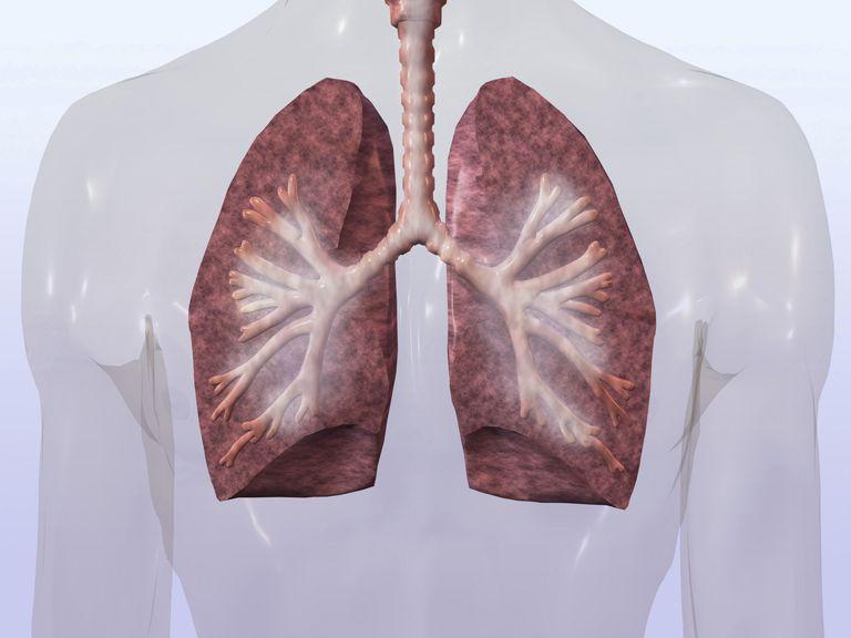 inflammation i lungerne